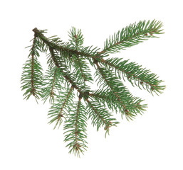 Fir branch, isolated on white