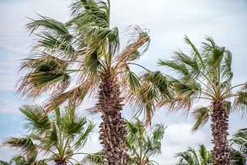 palms over sky