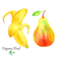 Banana, apple hand drawn painting watercolor illustration on white background