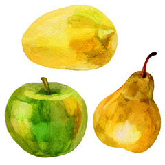 Pear, banana hand drawn painting watercolor illustration on white background