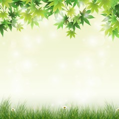 Spring meadow with green leaves background
