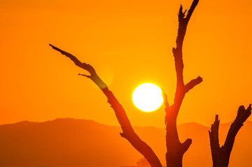 Silhouette of dead trees with sun rise