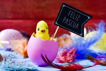 chick emerging from an egg and text feliz pascua, happy easter i