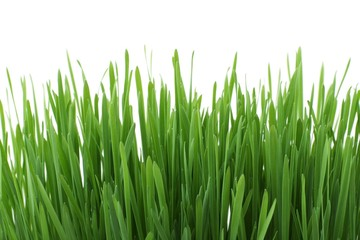 Isolated juicy spring grass