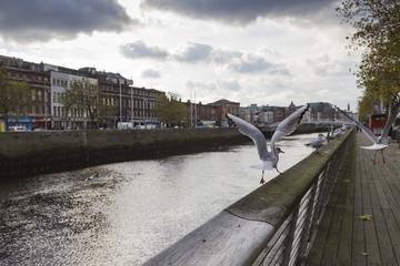 DUBLIN -JANUARY 12: Liffey river on January 12, 2015, Dublin.