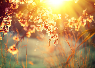 Affisch - Beautiful nature scene with blooming tree and sun flare