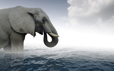Indian elephant bathing in sea water