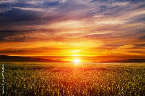природа колосья рассвет небо загрузить