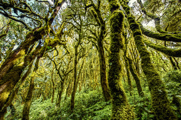 Beautiful evergreen forest in Garajonay national park on La Gomera island in Spain Wall mural