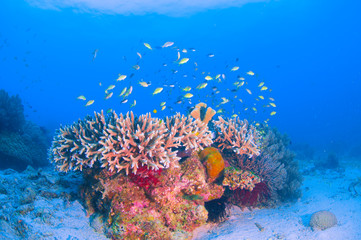 School of colorful fish on coral reef in ocean
