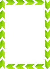 green leaves picture frame with white background, copy space