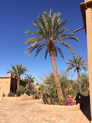 Tuinposter Tunesië palmier sous le soleil marocain