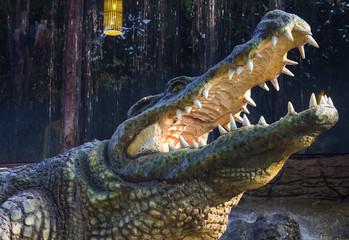 Close agape crocodile.