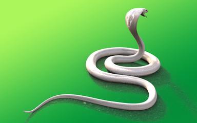 3d Albino king cobra snake isolated on green background