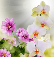 Beautiful flower background