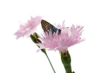 butterfly on flower isolated