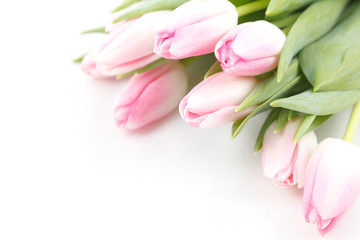 Pale pink tulips on white background