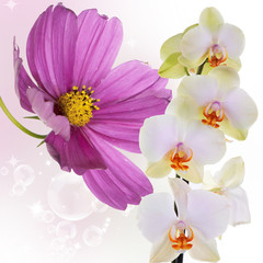 Beautiful exotic flower background