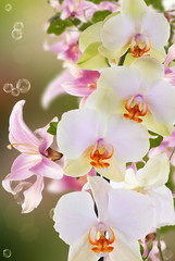 Beautiful exotic flower orchid