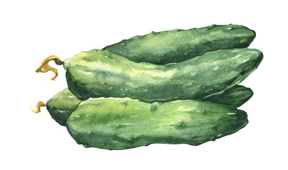 Watercolor fresh cucumbers isolated on white