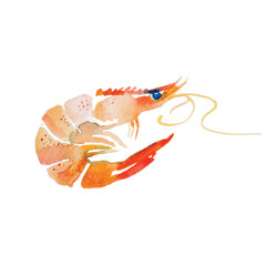 Watercolor shrimp.
