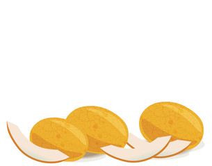 Melon fruits isolated. Vector