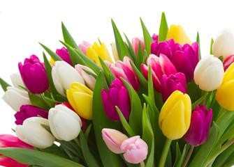 Obraz bouquet of  pink, purple and white  tulips - fototapety do salonu