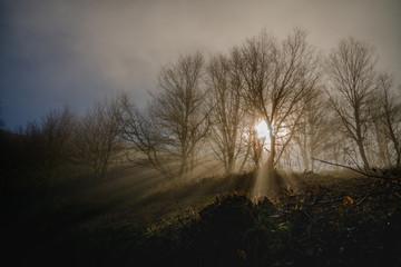 rayos de sol atrviesan la niebla entre los abedules