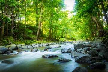 Beautiful dreamy mountain stream in the forest