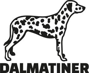 Dalmatian with breed name german
