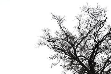 Background image of tree