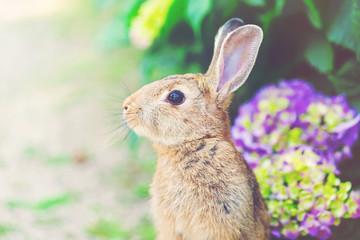 Rabbit in front of a hydrangea bush