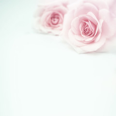sweet pink roses in soft and blur style on mulberry paper texture for romantic background