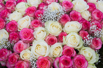 Big bunch of pink and white roses