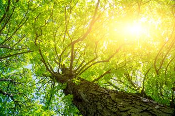 Sonnenschein in Kastanienbaum