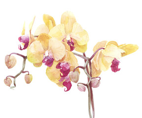 orchid flower print in soft colors, watercolor
