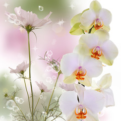 Exotic beautiful orchid flower