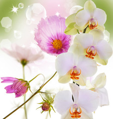 Exotic beautiful flower orchid