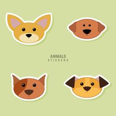 Cute dogs Face