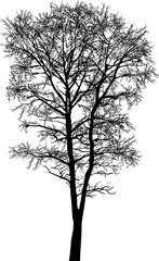 black high bare tree isolated silhouette