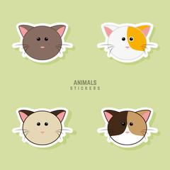 Cute cats Faces