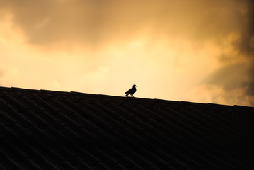 the bird on the top in sillhouette