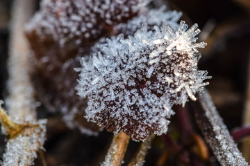 Frost on red leaf