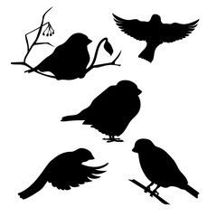 Bullfinch set vector