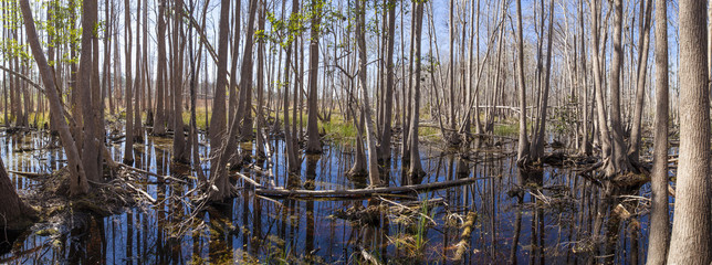 panorama of the Okefenokee swamp
