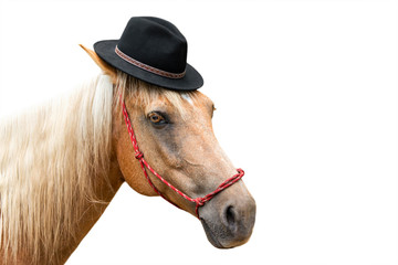 Palomino beige horse with white mane wearing black hat costume and red halter looking playful handsome sweet adorable dashing fun