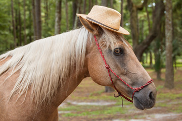 Palomino beige with white mane horse equine wearing straw hat in costume and red haltar