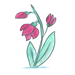purple flower cartoon watercolor isolated