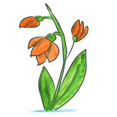 orange flower cartoon watercolor isolated