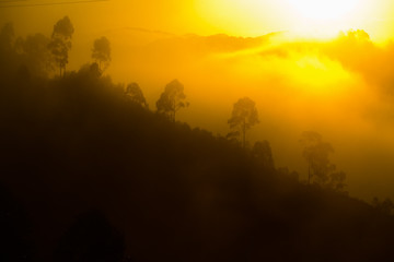 Sunrise at Bwindi Impenetrable Forest Wall mural